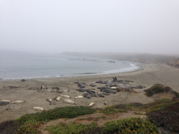 Highway 1, Elephant Seal Rest Stop, California