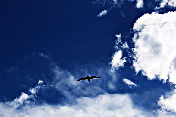 birdinflight