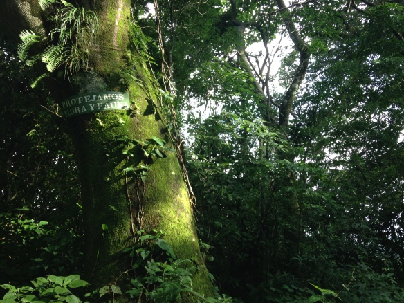 "In the middle of virgin jungle, a sign in Spanish reading ""We protect the flora and fauna"""